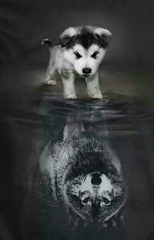 A little pup thinks that he is more then he really is a wolf, a alpha, a leader.