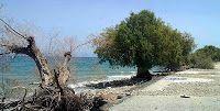 Θα υπάρξει Περιφερειακό – Δημοτικό ενδιαφέρον για την ΚΥΑ περί ανάπλασης ακτών; Αν και το πρόβλημα διάβρωσης των ακτών περιμένει (μάταια) τη δρομολόγηση αντιδιαβρωτικών έργων, αν και έχουν περάσει πάμπολλες ευκαιρίες ένταξης σε μελετητικά προγράμματα των παραλιών της Αιγιαλείας, ουσιαστικά βρισκόμαστε διαρκώς μπροστά σε ένα «ευχολόγιο», προτάσεων, εξαγγελιών και....