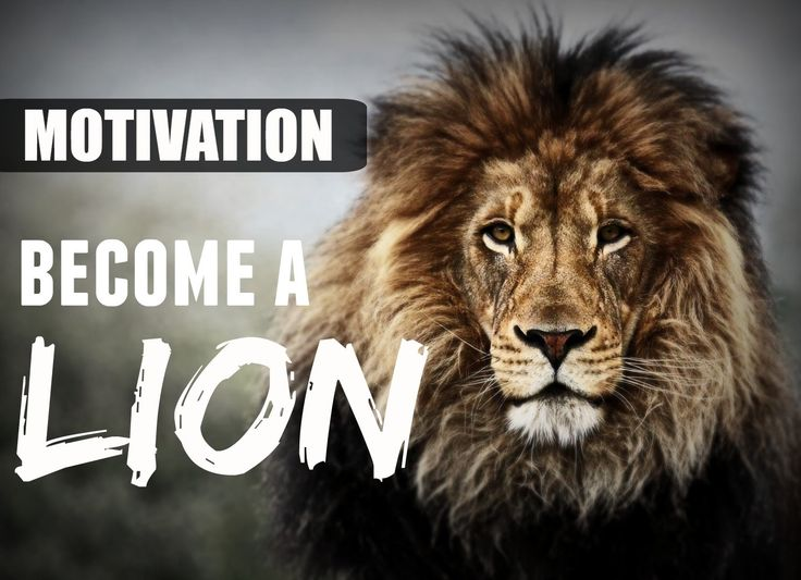 MOTIVATION - BECOME A LION