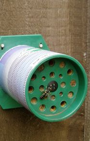 BEE  Pollen Bee Nest  Pollen Bee Nest is pre-assembled and includes suggested installation locations and a list of plants and flowers that attract the bees. An average garden will benefit from one or two nests, larger gardens three or four. You can watch the bees leaving and entering the nest and foraging for pollen. A card is provided so that the number of nest tubes filled can be recorded.