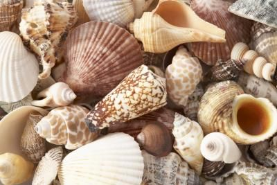 How to Decorate a Frameless Bathroom Mirror With Seashells