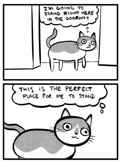Lol kitteh
