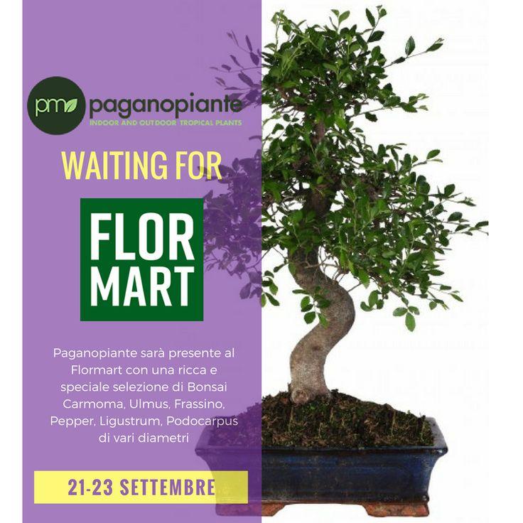 Dal 21 al 23 settembre 2017, Paganopiante, l'azienda floricola con sede a Ruvo di Puglia, parteciperà alla 68^ edizione del Flormart, a Padova, il salone internazionale del verde. Un evento in cui si incontrano le più importanti realtà del settore florovivaistico internazionale per conoscere le innovazione nel settore del verde. @Flormart