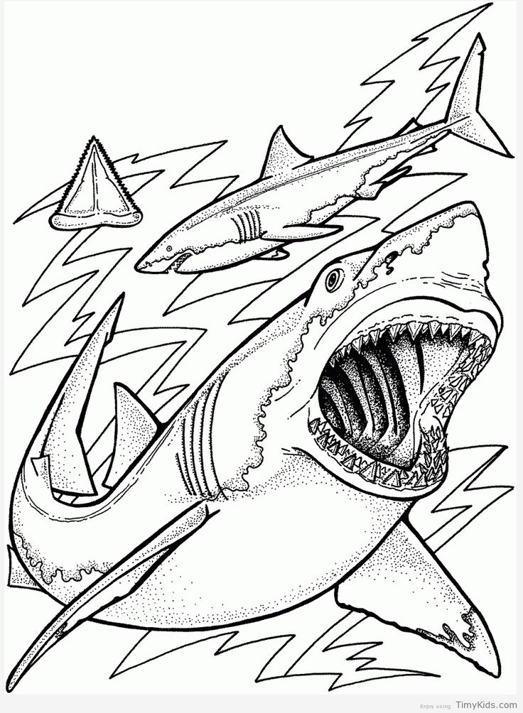 coloring pages ocean Ocean coloring pages, Shark