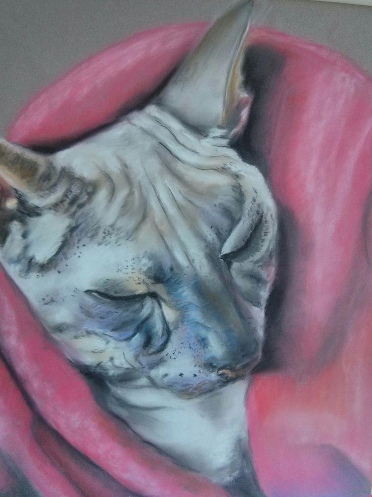Cat Sphinx. Pastel soft, pastel paper