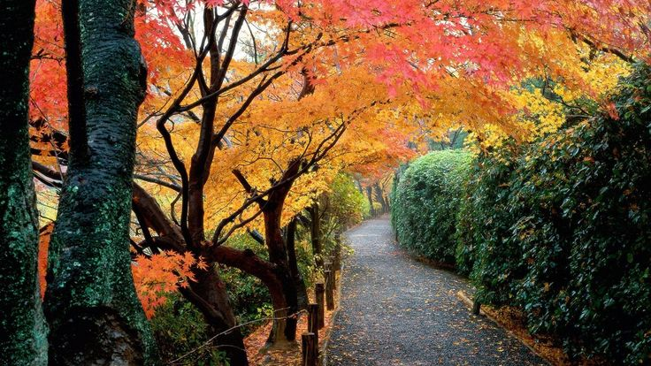 Wallpaper Japanese Autumn Nice Wallpapers HD [19201080]