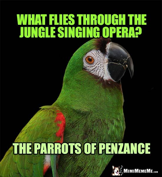 curious parrot asks what flies through the jungle singing