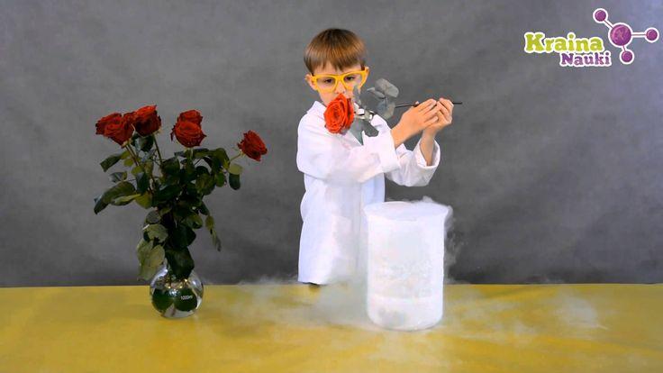 Profesor Kajtek i Kruszona Róża