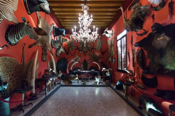 The Museum of Natural History of Venice, on the Grand Canal, is truly remarkable for its ancient building and intriguing up-to-date scientific galleries