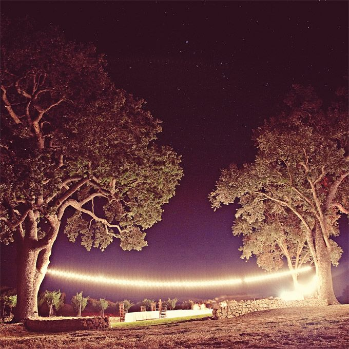 A single strand of lights strung between the two towering oaks.  One Love Photo.: Receptions Decor, Outdoor Wedding, Wedding Receptions, Wedding Ideas, Pretty Things, Real Wedding, Love Photo, Lights Ideas, Lights Wedding