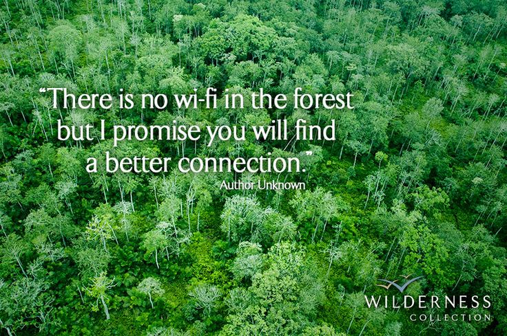 """""""There is no wi-fi in the forest, but I promise you will find a better connection""""  ~ Author unknown  #Odzala #Congo #rainforest"""