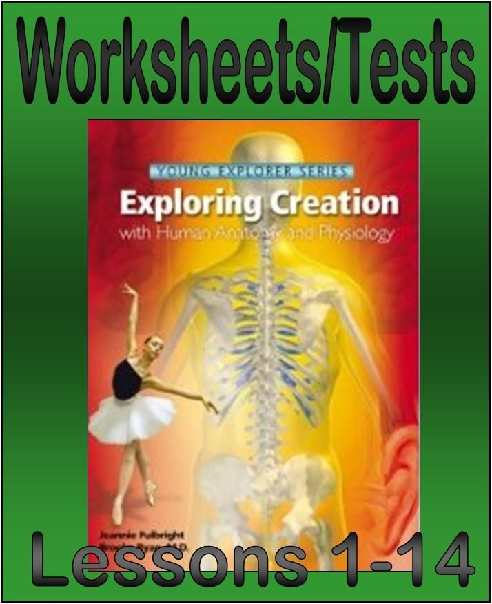 Worksheets/Tests for Apologia's Exploring Creation with Anatomy and Physiology - Joy in the Journey Resources | Science | CurrClick