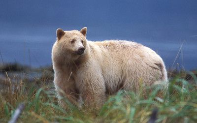 scotland's national animal | National Animals Quiz: Questions | Quizzes, Crosswords, Hangman ...