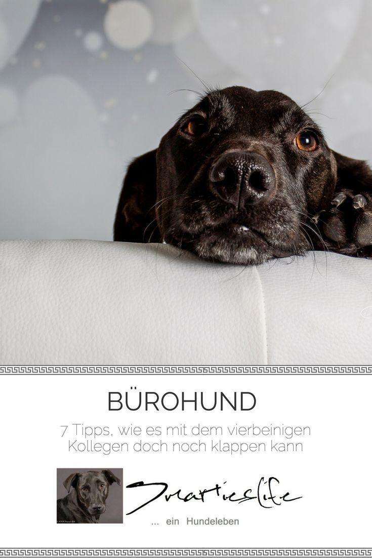 7 Tipps Wie Es Mit Dem Burohund Klappen Kann Hunde Hund Im Buro Tipps