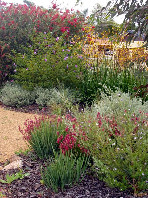 25 best ideas about native gardens on pinterest for Native garden designs