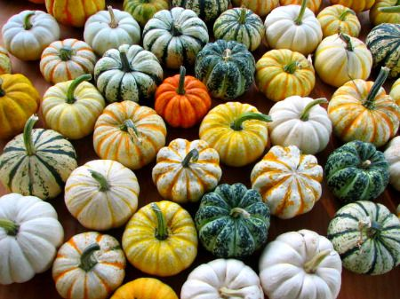 Pumpkins: Colour Minis, Islands Seeds Minis, Autumn Ideas, Pumpkin Decor, Minis Pumpkin, Halloween Fal, Home Decor Fall, Islands Seedmini, Autumn Love