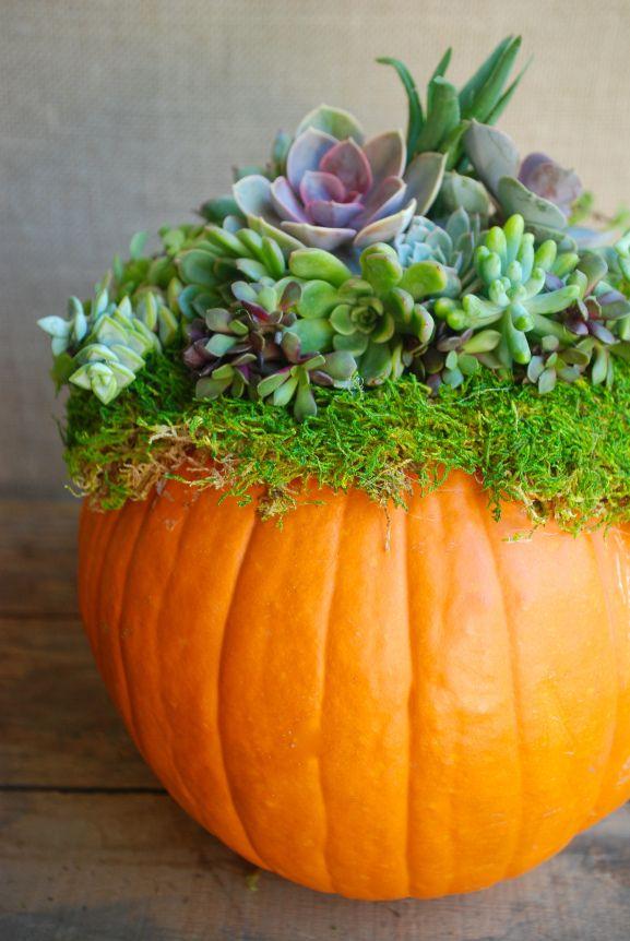 Pumpkins + Succulents! How to make a simple arrangement with succulents and pumpkins.