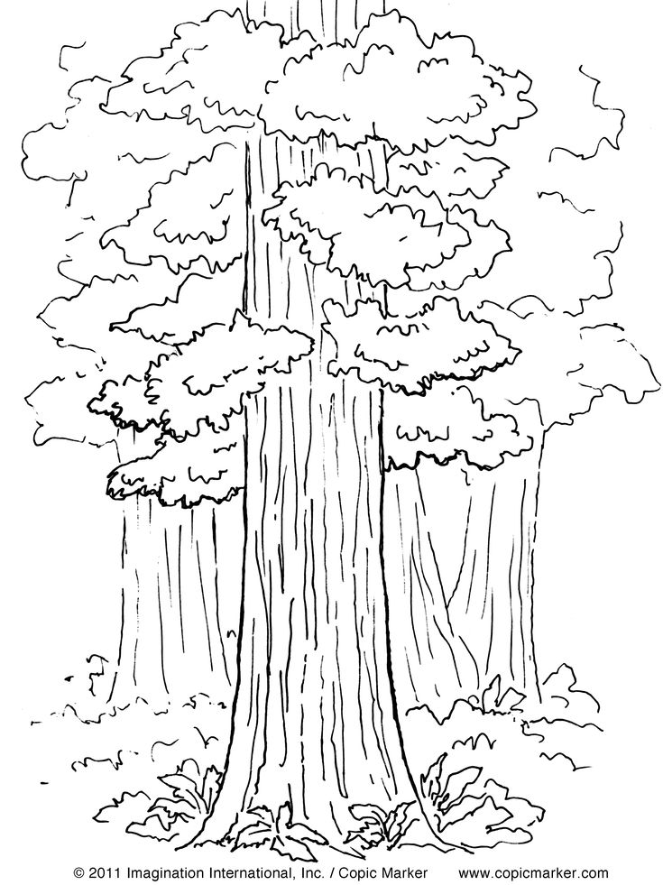 234 best Trees etc images on Pinterest Drawings Drawing and Fall