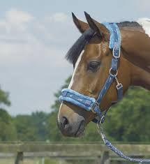 halster paard die gebruik je als je buiten met je paard gaat lopen en met poetsen maar niet met rijden je heb halster maar ook touw der bij