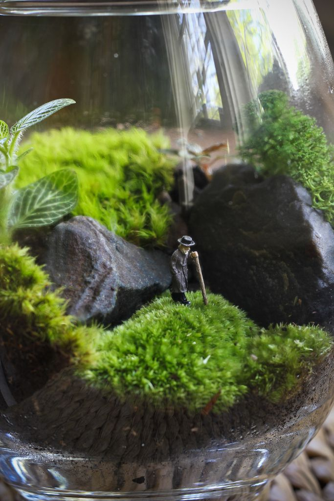 I want one of these!    Miniature Garden
