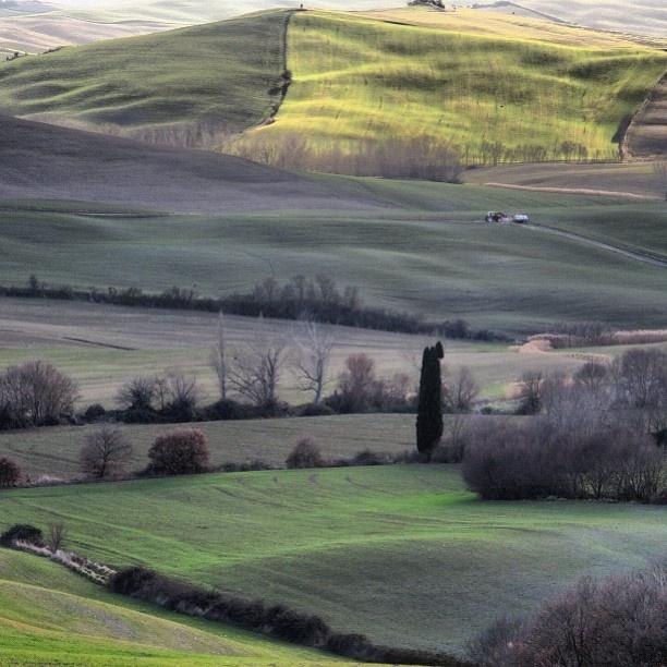 A mix of greens - Tuscany - @cintiasoto- #webstagram
