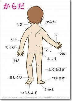 言葉の絵カード「体(2)」