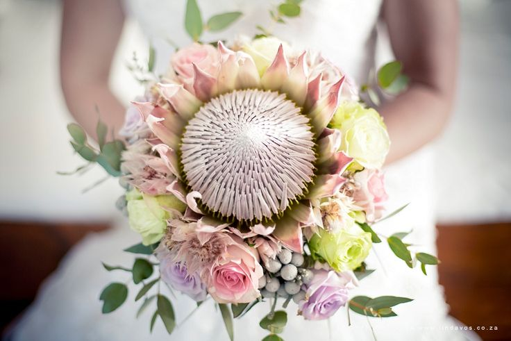 Beautiful king protea bridal bouquet at wedding Laatson Porterville South African Cape Town wedding