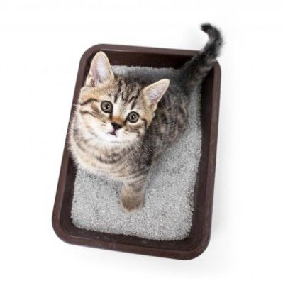 Coat a kitty litter tray. If you are tired of struggling to clean out the kitty litter tray, coat it with a little coconut oil before you add the kitty litter. This will prevent the litter from sticking.