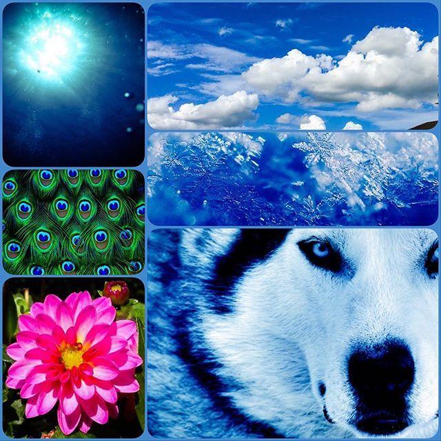 【o_towa846】さんのInstagramをピンしています。 《冬色のコラージュ #collage #コラージュ #photoshop #シベリアンハスキー#海#青空#雪#孔雀#ダリア》