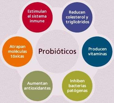 propiedades de los probioticos