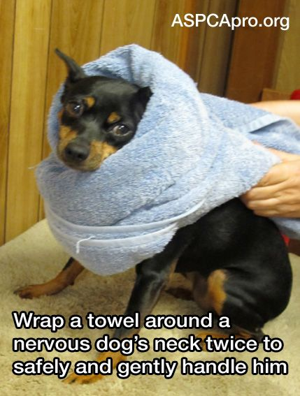 21 Life Hacks Animal Shelters Can't Live Without | ASPCA Professional