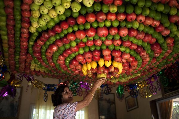 A Samaritan woman puts a finishing touch on a fruit sukkah, or temporary shelter, in her home on October 11 near the city of Nablus in the northern West Bank