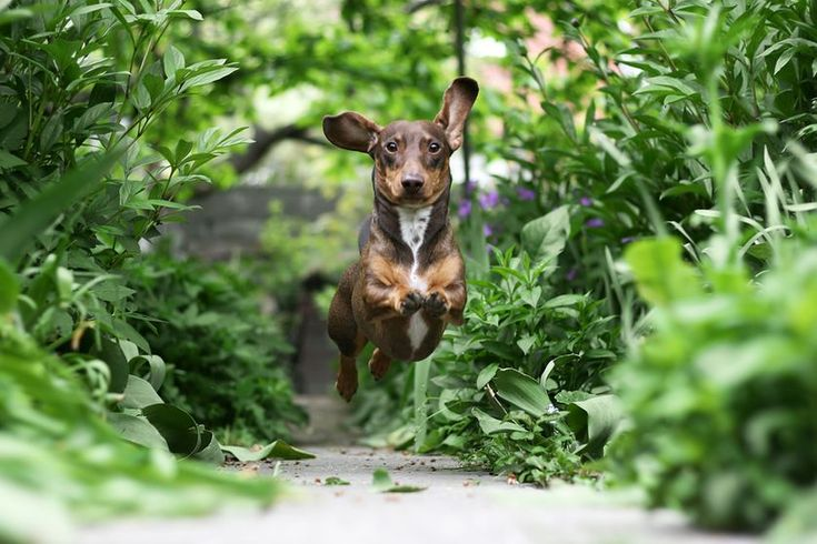 Backyard Ideas to Delight Your Dog
