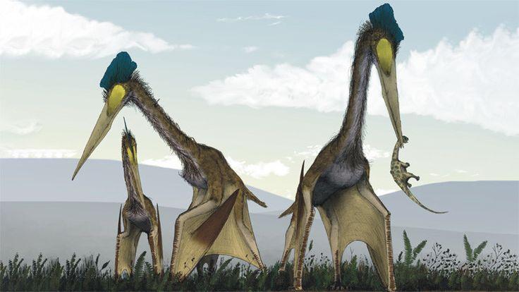 Hallan fósiles del mayor 'monstruo' prehistórico volador que 'desayunaba' dinosaurios