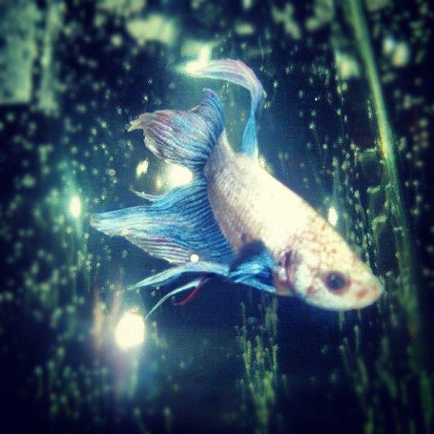 25 Best Fishy Friends Images On Pinterest Fish Aquariums