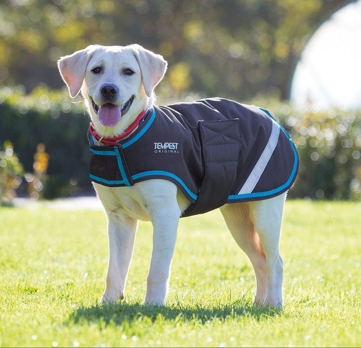 Waterproof Dog Coat  | Shires Equestrian