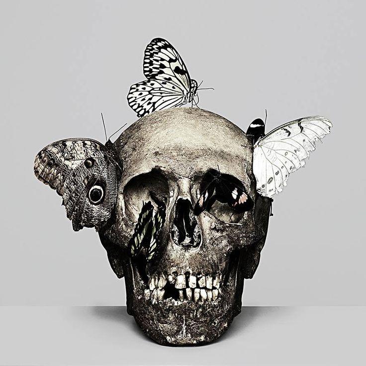 Rankin Photography #skull #butterflies #butterfly