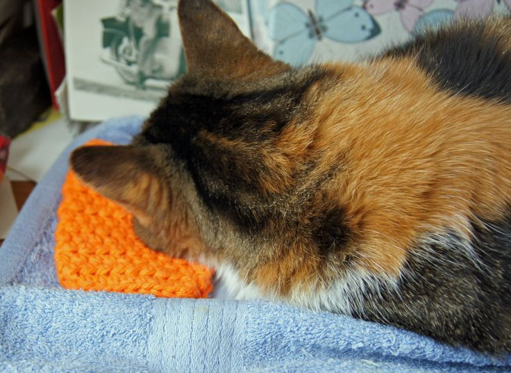 The 'purfect' facecloth for your diva. Doubles as a soft pillow for those tactile cats; or a rinse it with cold water to keep their faces cool in the dog days of summer:  Find them here: http://www.pinterest.com/vrottnerjewels/my-favorite-advisor-diva-paws-4-advice/  She wrote about her experience here: http://divapaws4advice.blogspot.ca/2014/05/mothers-day-time-to-paws.html