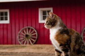 barn cats | Keeping Your Barn Cats Healthy | Off The Grid News