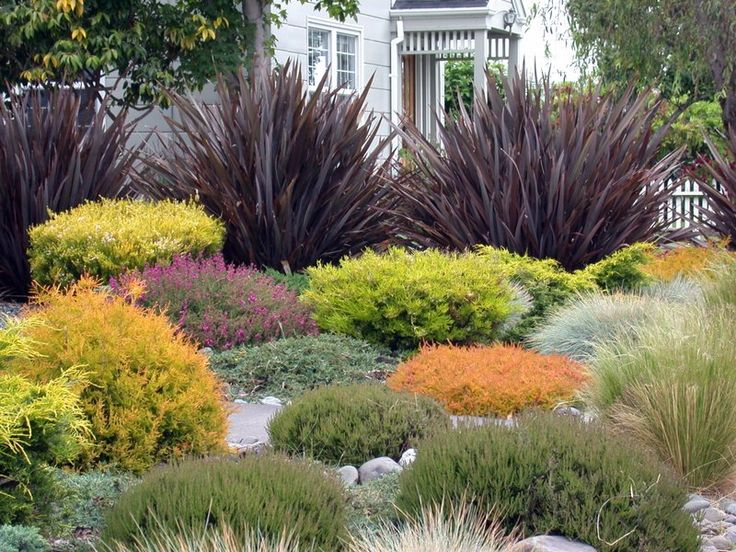 Plant combination outside pinterest gardens drought for Front yard landscaping plants and shrubs