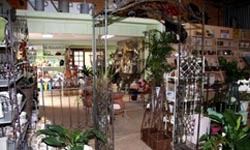 Visit our local nursery and enjoy a beautiful rose petal enhanced Earl Grey tea or coffee and cake...so much to do and enjoy on Tamborine Mountain! http://www.lissongrove.com.au/experience.html