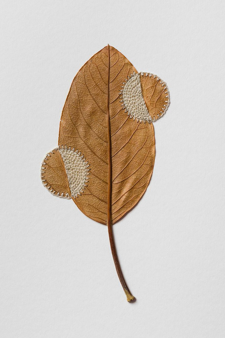 Dried Leaves Crocheted into Delicate Sculptures by Susanna Bauer | Colossal