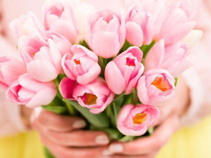 Geheimrezepte für die ewige Blütenpracht gibt es viele. Wir haben die vier bekanntesten getestet und verraten die Ergebnisse