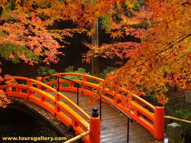 Toursgallery.com will take you to see the best autumn foliage in Japan.