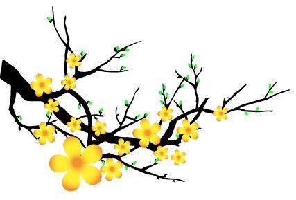 Hoa mai | New Year Vietnam | Pinterest | Tips and Cap d'agde