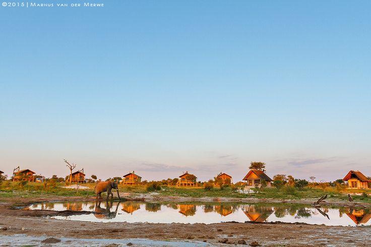 Elephant sands #2 by Marnus van der Merwe on 500px