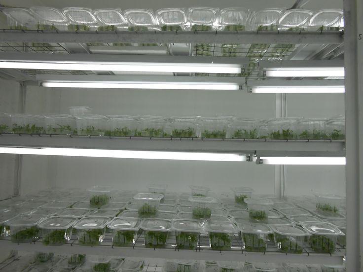 Plante care evolueaza in conditii optime de dezvoltare