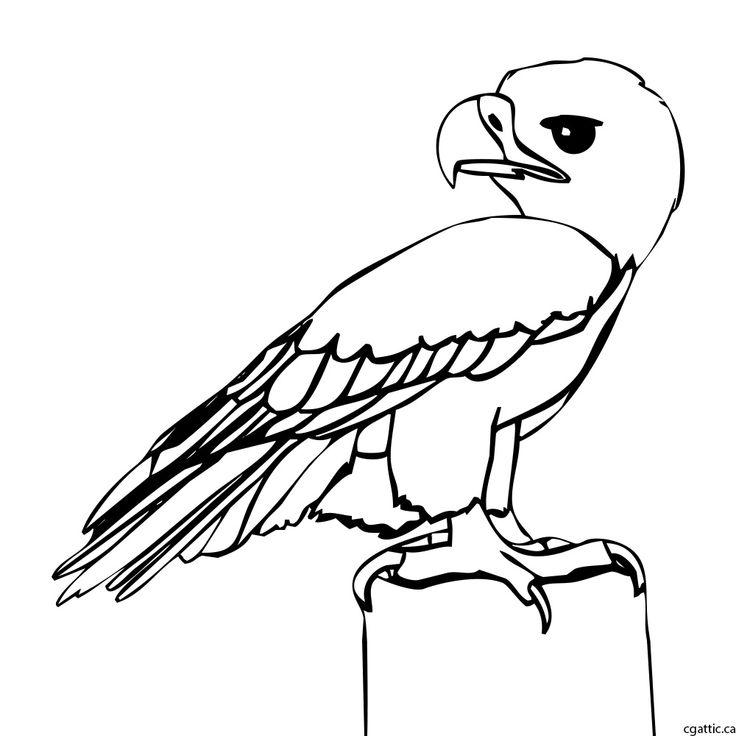 eagle cartoon step 2: refine the sketch into a line drawing.