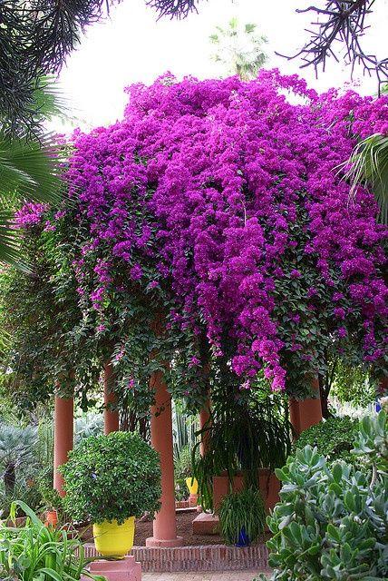 Jardins Majorelle Flowers Garden
