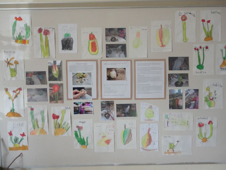 Amaryllis inquiry - bulbs/plants